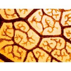 Mikroskopické preparáty - Rozmnožování živočichů
