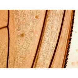 Mikroskopické preparáty - Bakterie a primitivní organizmy