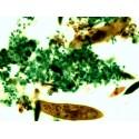 Mikroskopické preparáty - Ještěři, hadi, ptáci