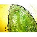 Mikroskopické preparáty - Botanika č.2